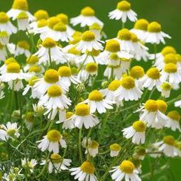 园子养花对身体健康