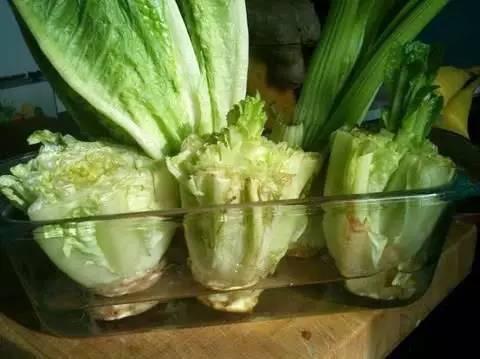 生菜种植的小知识(生菜种植需要注意哪些方面)